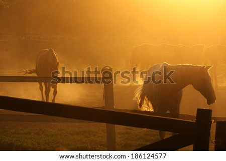 Beautiful horse ranch with sunset - stock photo