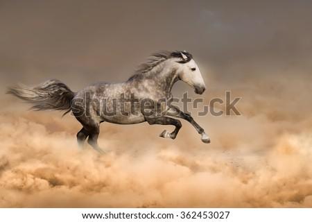 Beautiful horse run gallop in dust - stock photo