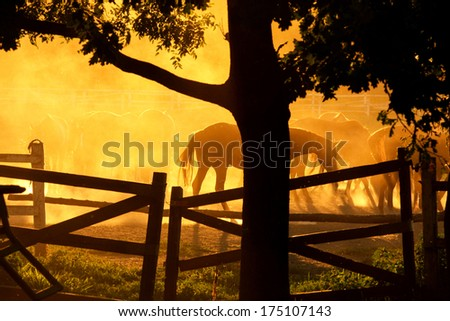Beautiful horses ranch with sunset - stock photo