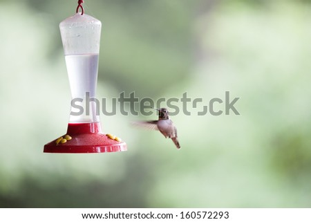 Beautiful hummingbird flying to her feeder on the patio - stock photo
