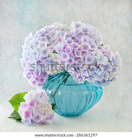 beautiful hydrangea flowers in a vase on a blue background . vintage style ,grunge paper background.  - stock photo
