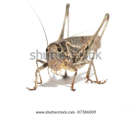 beautiful image of insects that were photographed in close-up - stock photo