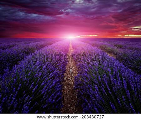 Beautiful image of lavender field Summer sunset landscape - stock photo