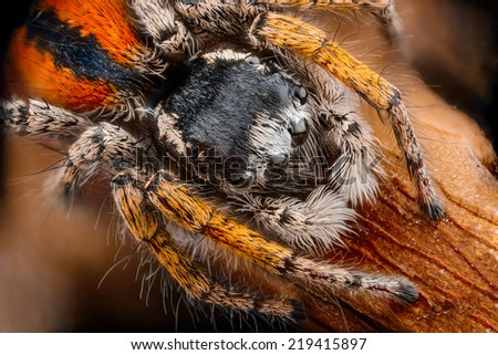 beautiful image of spider that were photographed in close-up - stock photo