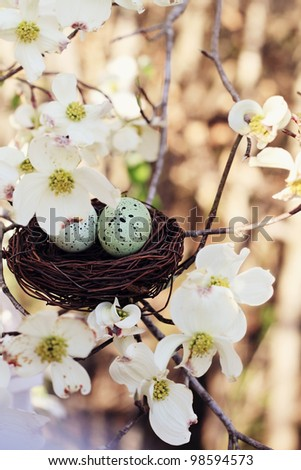 Beautiful image of two eggs in a small nest with dogwood blossoms surrounded it. Extreme shallow depth of field with some blur. Selective focus is on the eggs. - stock photo