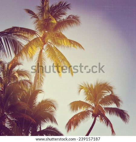 beautiful instagram of palm trees with sun setting - stock photo