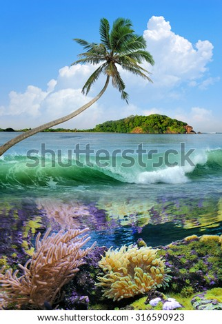 Beautiful island with palm trees and blue sky - stock photo