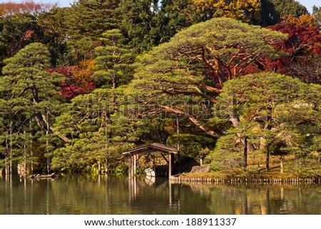 Beautiful Japan forest in Shinjuku park. - stock photo