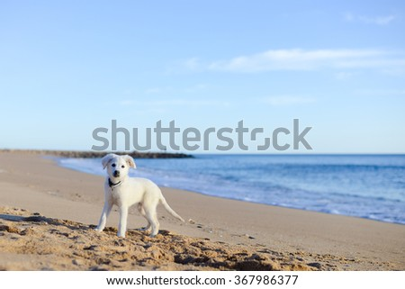 Beautiful joyful cute dog on the ocean beach background  - stock photo