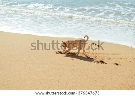 Beautiful joyful cute dog on the ocean water and sandy beach background  - stock photo