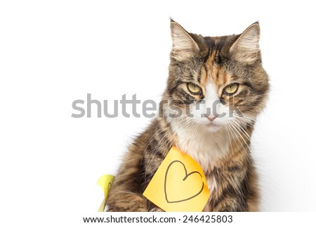 Beautiful kitten and yellow post-it with drawn heart - stock photo