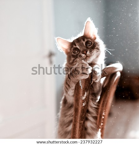 Beautiful kitten playing on a sunny day at home - stock photo