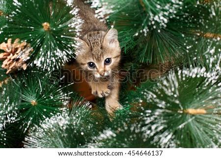 Beautiful kitten playing with green fir tree - stock photo