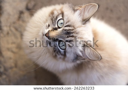 beautiful kitten walking on the street in the spring frame top - stock photo