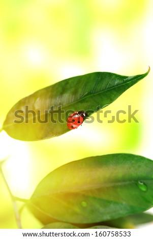 Beautiful ladybird on green plant - stock photo