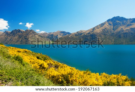 Beautiful lake Wakatipu with mighty mountains and blooming yellow gorse (Ulex europaeus). Otago region, New Zealand - stock photo