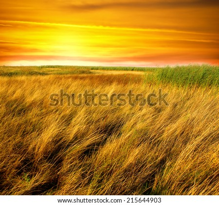 Beautiful landscape covered with golden summer grass - stock photo