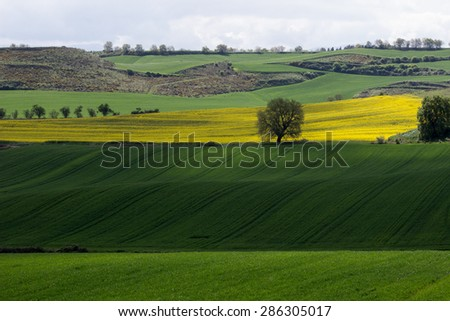 Beautiful landscape during Camino de Santiago. French route. The camino Francaise. Spain. Europe. - stock photo