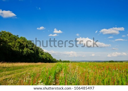 beautiful landscape, forest and field - stock photo
