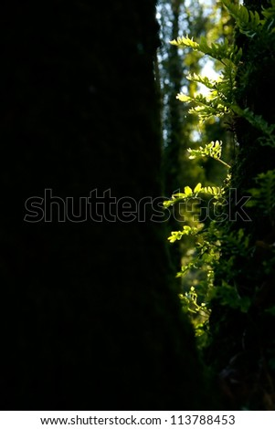 Beautiful landscape Forest with light making the way through the trees - stock photo