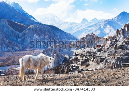 beautiful landscape from Nepal, Tibet, white horse and Himalayan mountains, Annapurna circuit - stock photo