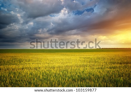 Beautiful landscape. Green meadow on sunset. - stock photo