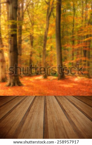 Beautiful landscape image of forest covered in Autumn Fall color contrasting green and orange, brown and gold with wooden planks floor - stock photo