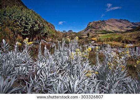 beautiful landscape in Cajas National Park landmark Azuay Ecuador South America - stock photo