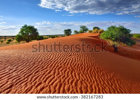 Beautiful landscape in Kalahari with big red dune and bright colours at sunset time - stock photo
