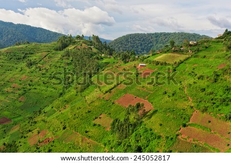 Beautiful landscape in southwestern Uganda, at the Bwindi Impenetrable Forest National Park, at the borders of Uganda, Congo and Rwanda. The Bwindi National Park is the home of the mountain gorillas. - stock photo