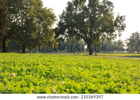 Beautiful landscape of green lawn with trees in park under sunny light - stock photo