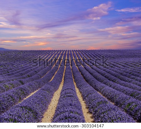 Beautiful landscape of lavender fields at sunset - stock photo