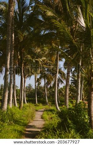 Beautiful landscape of lush greenery in Ubud, Bali island, Indonesia - stock photo