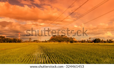 beautiful landscape of rice field in planting season, Ratchaburi, Thailand, process color. - stock photo