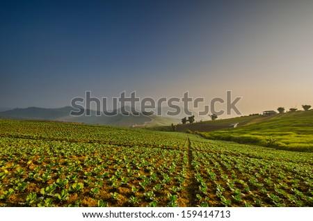 Beautiful landscape panorama - stock photo