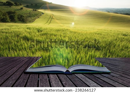 Beautiful landscape wheat field in Summer sunlight evening with added lens flare filter conceptual book image - stock photo