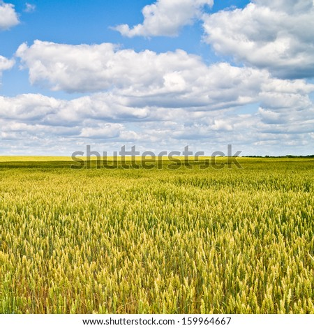 beautiful landscape with blue sky and white clouds - stock photo