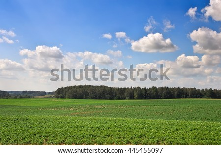 Beautiful landscape with field of potatos and cloudy blue sky. - stock photo