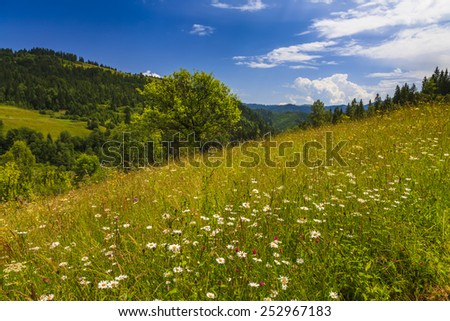 Beautiful landscape with flowering meadow, trees and hills. - stock photo