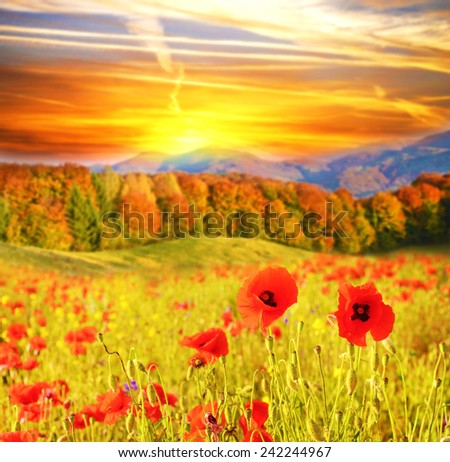 Beautiful landscape with flowers poppies on a background of mountains at sunrise - stock photo