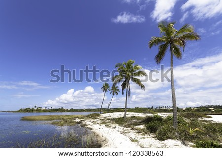 beautiful landscape with island palm trees in the tropical coast of sauípe paradise in Bahia Brazil - stock photo