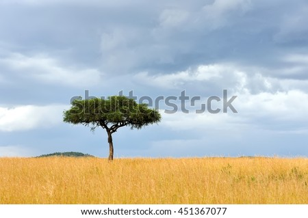 Beautiful landscape with one tree in Africa - stock photo
