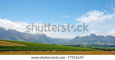 beautiful landscape with vineyard and mountains in province West Cape(South Africa) - stock photo