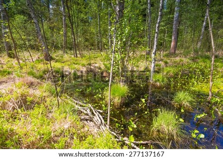Beautiful landscape with wetlands at springtime. Green wetlands with dead trees trunk photographed in spring. Polish landscape. - stock photo