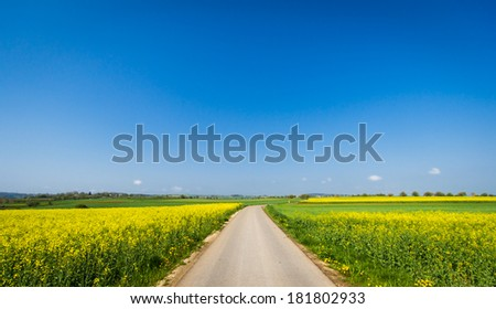 Beautiful landscape with yellow canola fields. Clear blue sky with some tiny clouds. Free road in the middle.  - stock photo