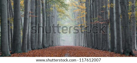 Beautiful lane with tall trees on both sides of the pathway in autumn, leading to a colorful and symmetrical composition - stock photo