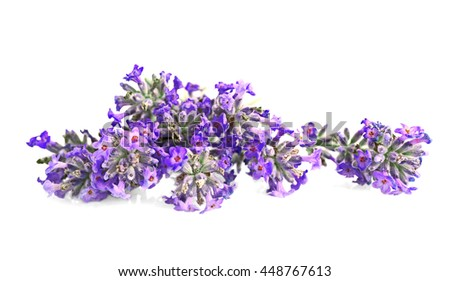 Beautiful lavender on white background - stock photo