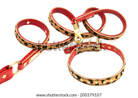 beautiful leash and collar on a white background - stock photo