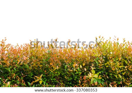 Beautiful leaves wall isolated over white - stock photo