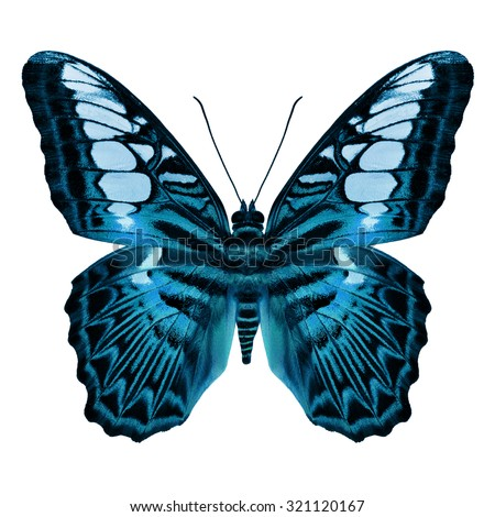 Beautiful Light Blue  butterfly upper wing profile isolated on white - stock photo